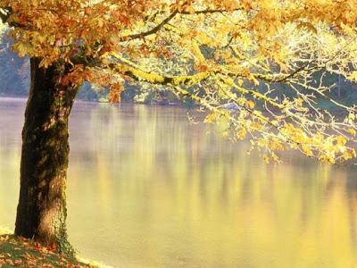 Foglie autunnali sul lago
