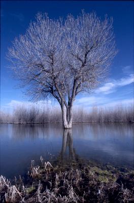 L'albero del bosco apache