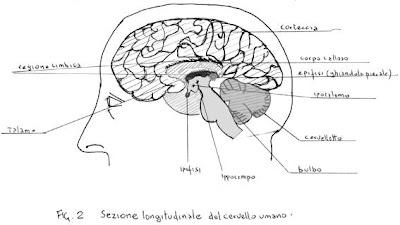 cervello e significazione