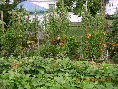 San jose community gardens Tomato garden design