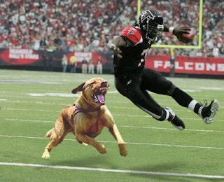 Michael Vick, PETA Wants Your Brain Scanned; What About The Rooneys?