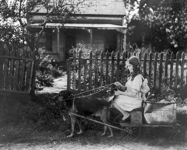 Animals Pulling Wagon : Vintage photos of dogs pulling carts sweet juniper