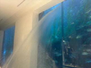 Akuarium Terbesar di Dunia Mall Dubai