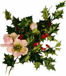 http://4.bp.blogspot.com/_Po-9DVGL4eA/R2cyAlichtI/AAAAAAAAAHI/-n-7GocRPsQ/s200/holly-blooms.jpg