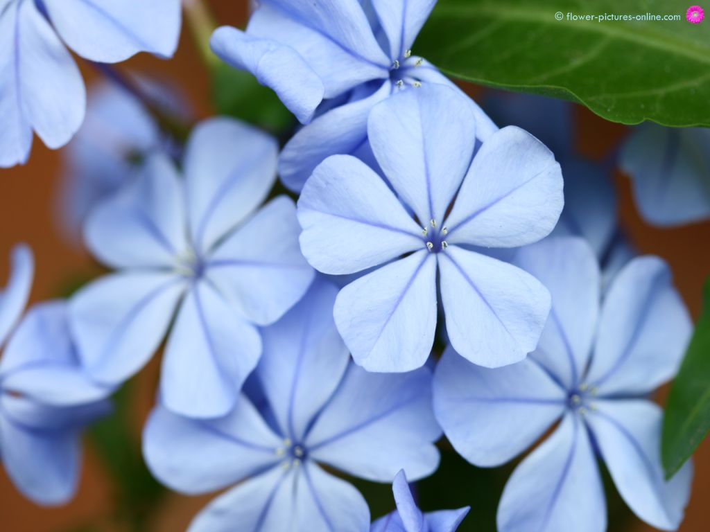 pic new posts wallpaper blue floral