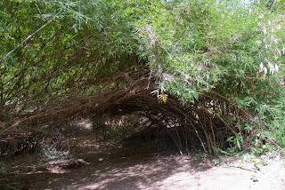 Ratanakiri - Bamboo tunnels around the Yeak Loam lake