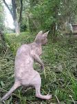 Фаня-кенгуру