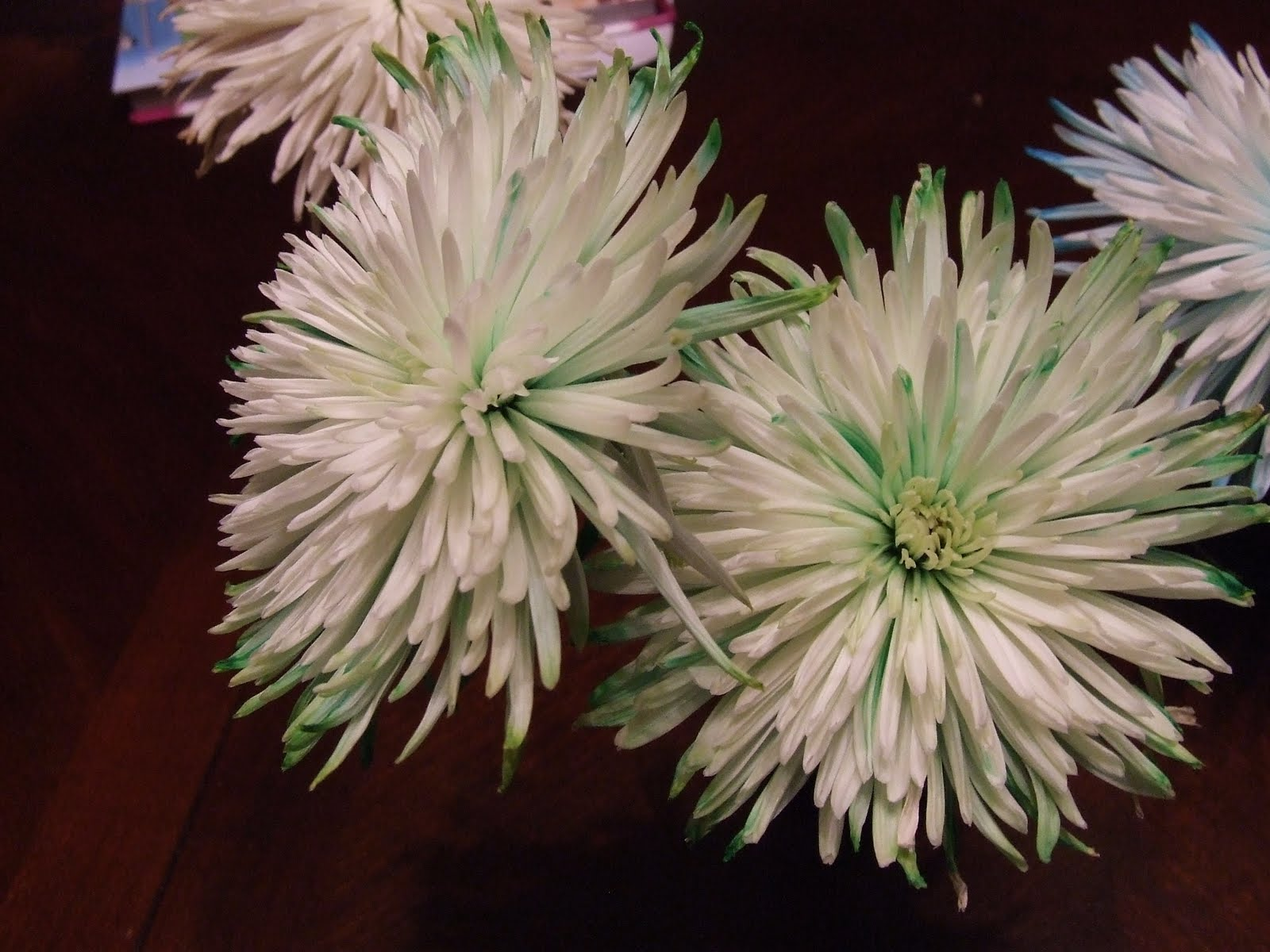 Akridge Academy: Food Dye in Flower Water