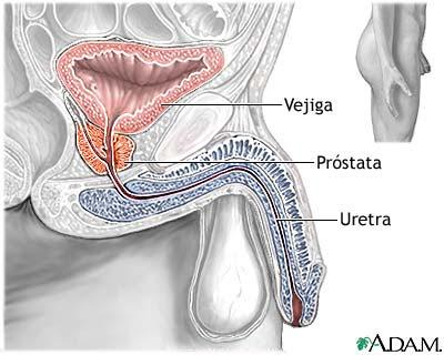 quiz virtual de histologia aparato reproducto rmasculino y femenio ...