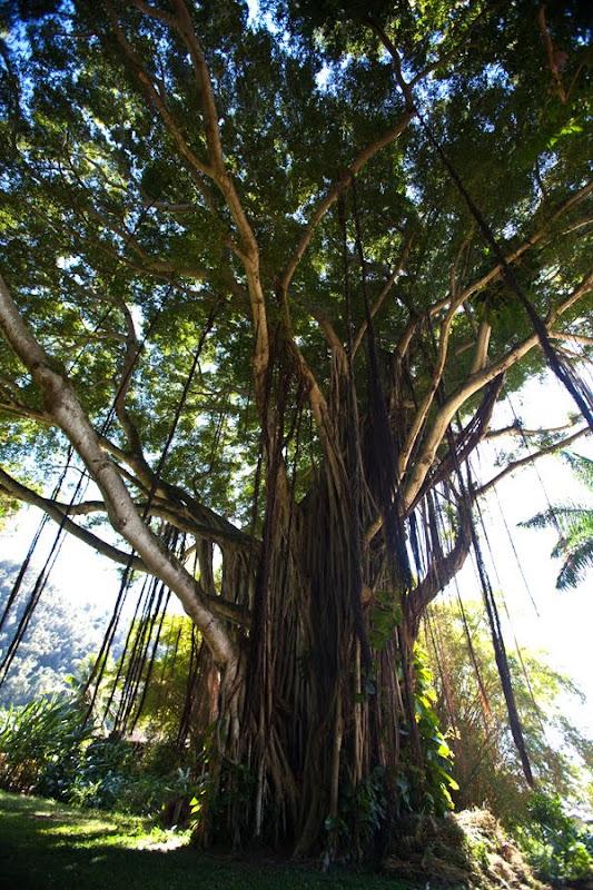 Nuuanu Valley Park - Ceremony - 2925 Pali Hwy, Honolulu, HI, 96817