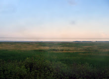 The Siberian Steppe