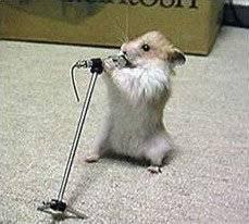 Ratón cantarín