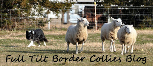 Full Tilt Border Collies
