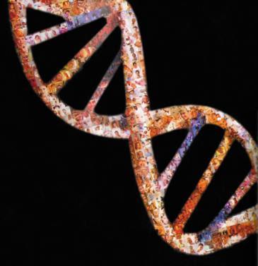 estructura del adn. La estructura del ADN
