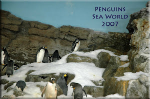 The penguin exhibit at Sea World Orlando