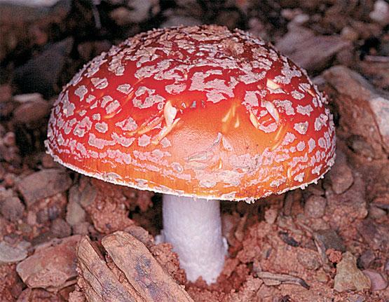 El hongo en los pies que sanar rápidamente