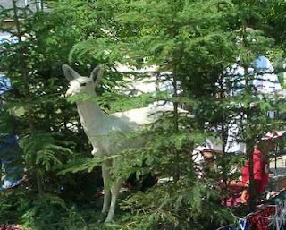 The albino deer from Curtis Drug