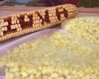Fresh sweet corn, ready for the freezer