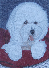 Bichon Frise, Original Dog Portrait by AMP