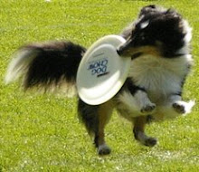Maleah Frisbee