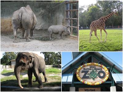 Baby Boutiques Baton Rouge on Baton Rouge Zoo