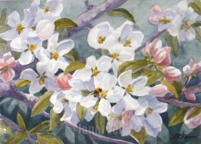 Apple Blossoms watercolor painting
