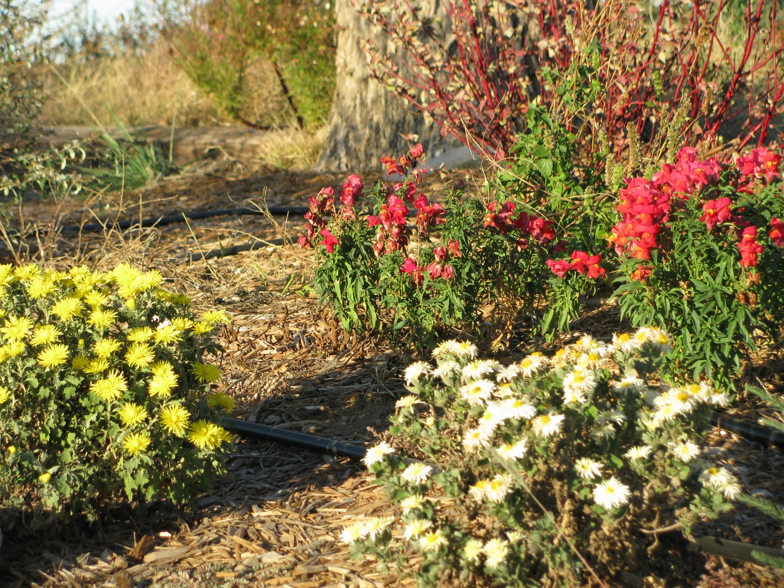 There\'s no place like Home: November Blooms