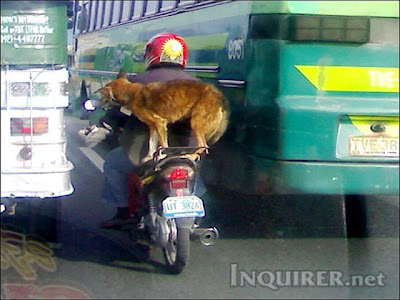 Dog on a motorcycle in Ortigas road!