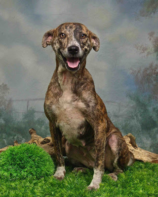 Adopt a shelter dog rescued from dog meat traders!