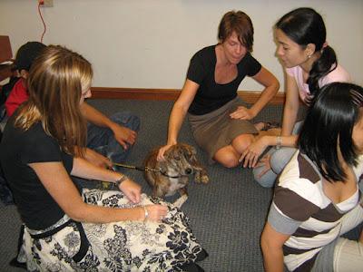 Homeless dog Hiyas for Adoption