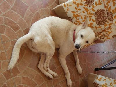 Former shelter dog Jasmine at her new home