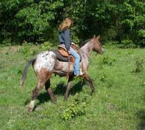 5 Acre Dream Minus The 5 Acres Craigslist Horse