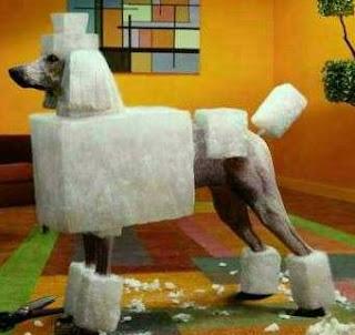 http://4.bp.blogspot.com/_Q4OmpMymPbc/SgNEhD3OElI/AAAAAAAAAAM/gt7L2QzZE1c/s320/square+poodle.jpg