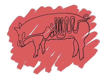 cerdo ANATOMIA