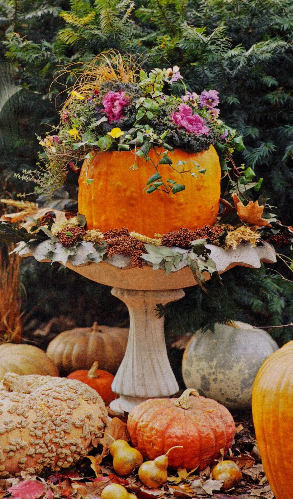 Pristine Cristine  Posh Pumpkins