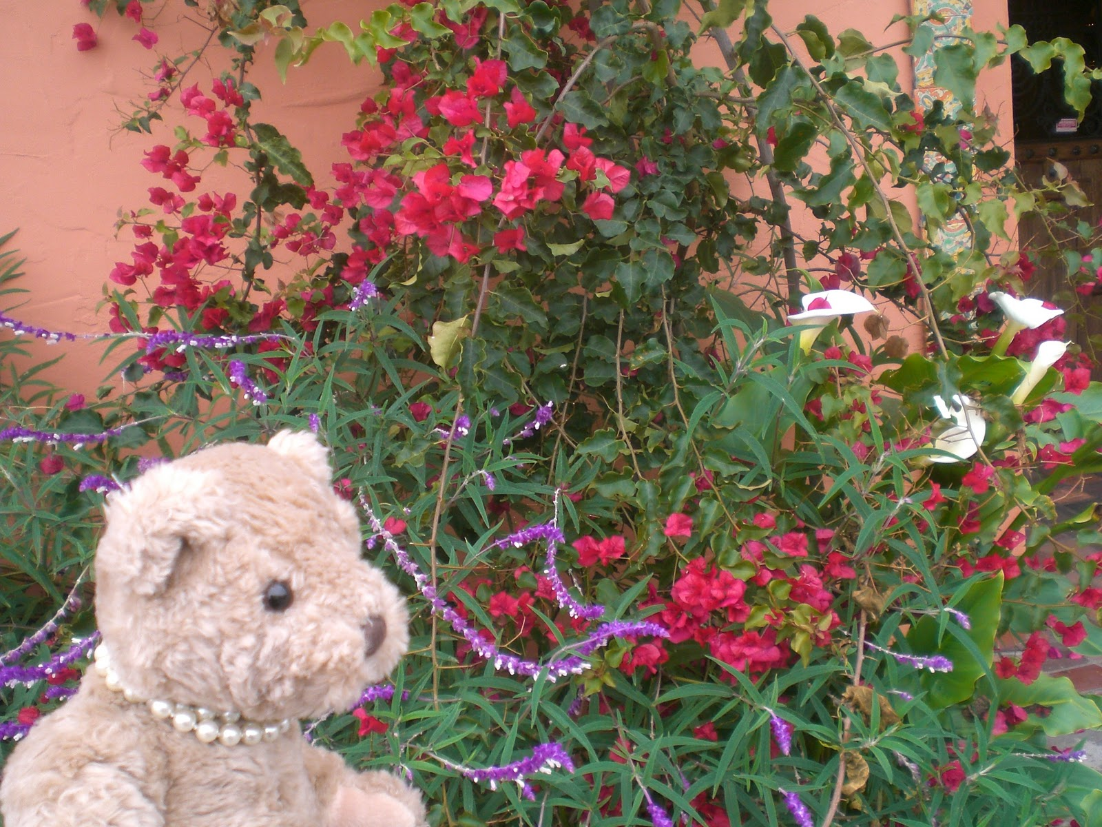 Teddy and Nibs December Flowers