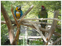 colorful parakeets contentment