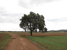 Mi árbol, mi piedra, el camino...