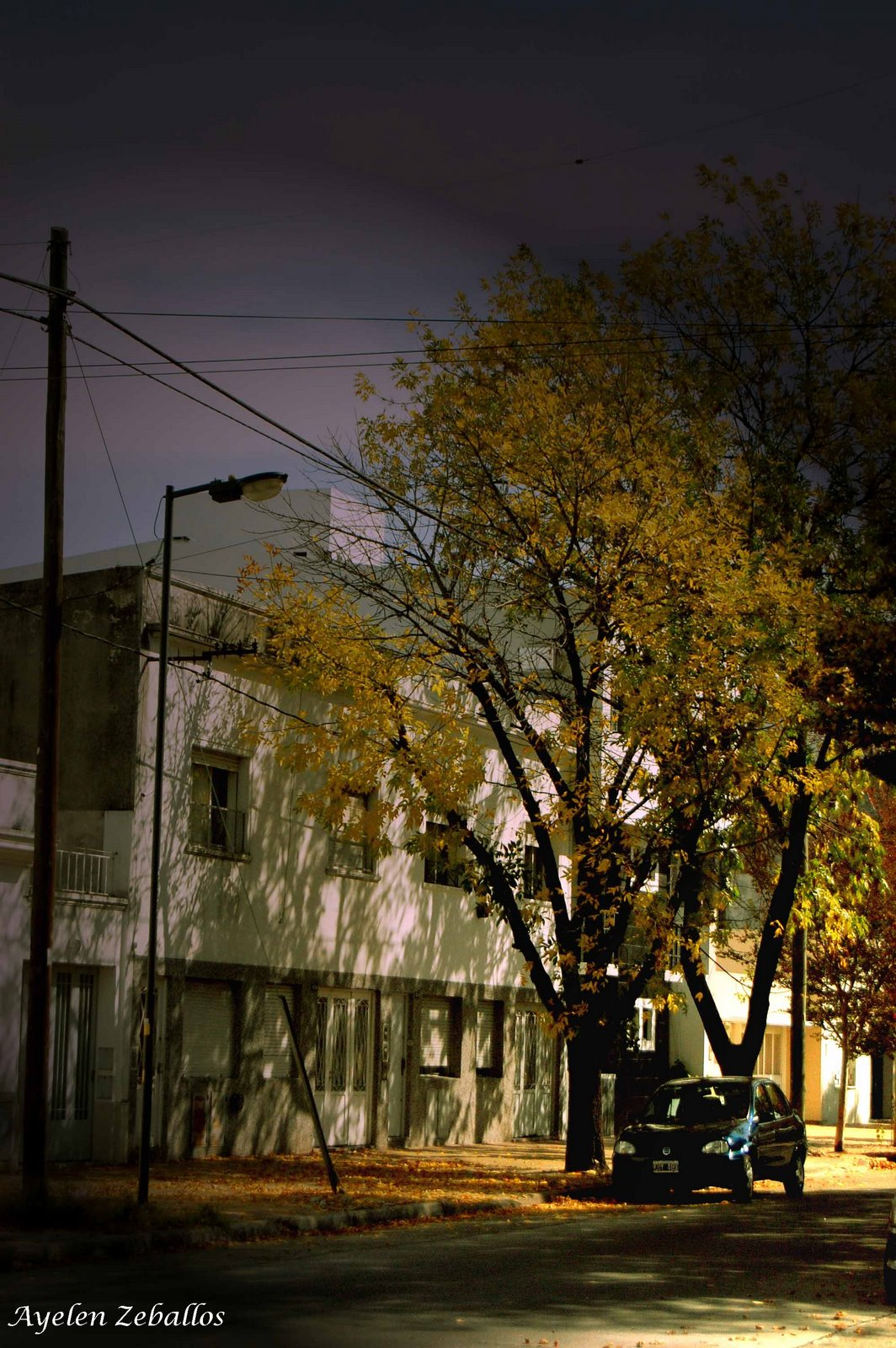 [otoño+038+copia.jpg]