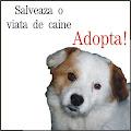 Salvati o viata de caine. Adopta!