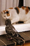 Cat and bird; photo by Trudi Smith