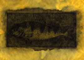 """""""Pesce Persico"""" anno 2008 inchiostri lavorati su carta cm.30x21"""