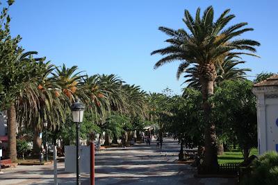 Palms in Tarifa
