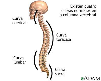 Los ejercicios de fuerza a las curvaturas de la columna vertebral