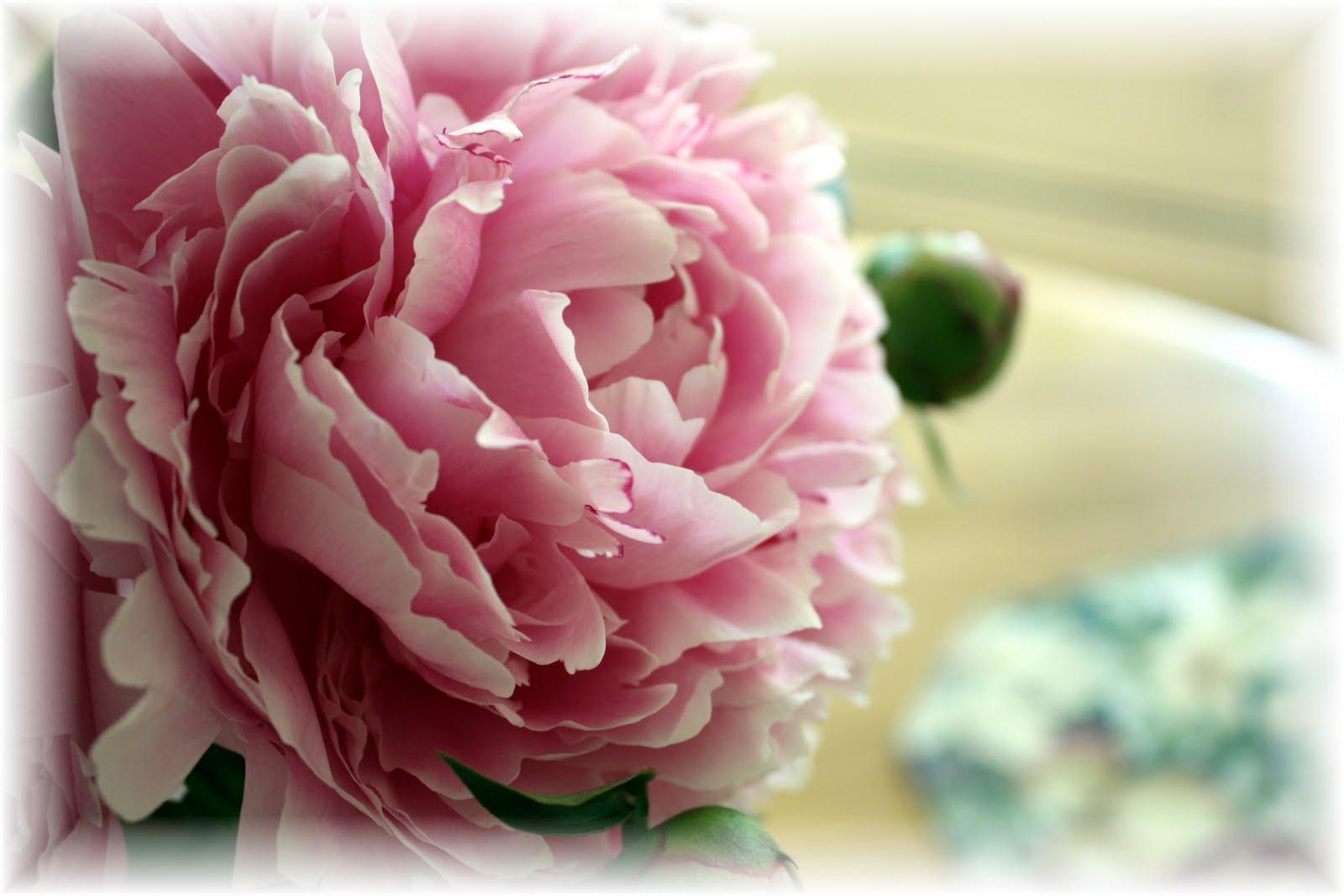 Tissue paper flowers in my garden Journal