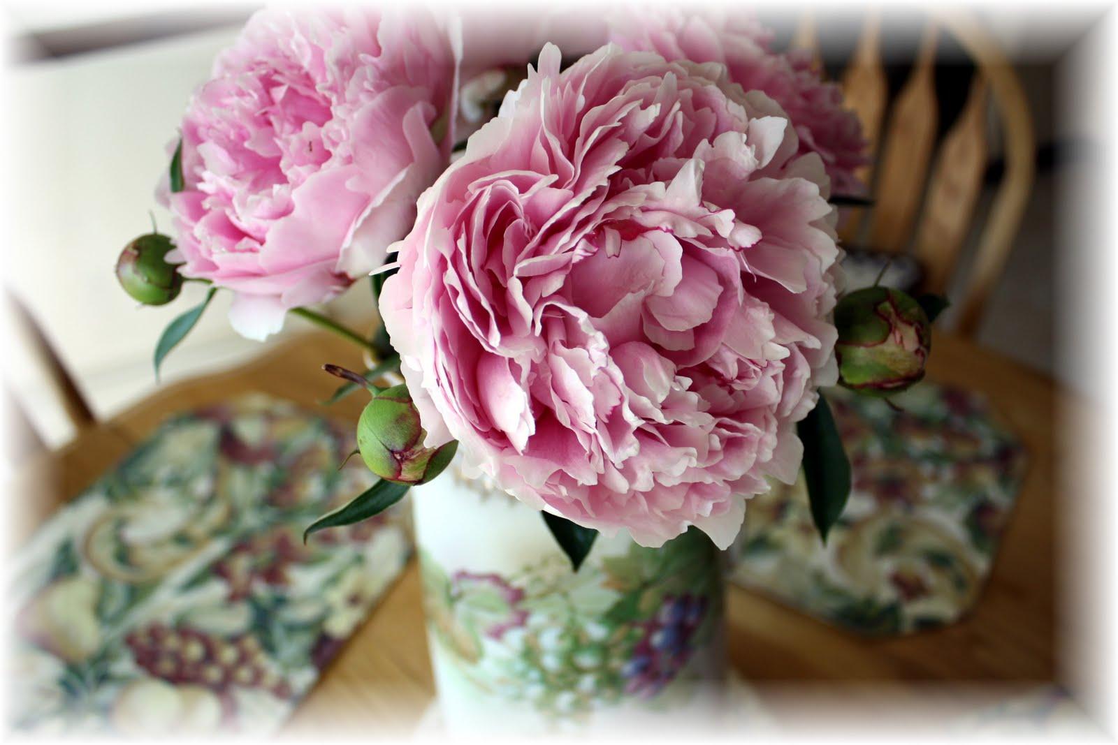 http://4.bp.blogspot.com/_QFdcJfEpj7s/S_s7FL7ys4I/AAAAAAAAAVc/lHXC6eBC3qk/s1600/IMG_5592.JPG