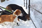Mina hundar