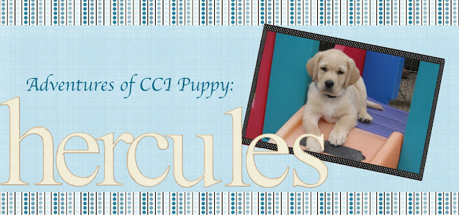 Adventures of  a CCI puppy: Hercules III