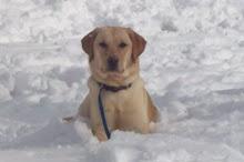 CCI Puppy #3: Mardene