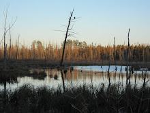 Beaver pond...